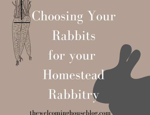 Best Combo for Meat Rabbit Breeds we have found…Series Day 2