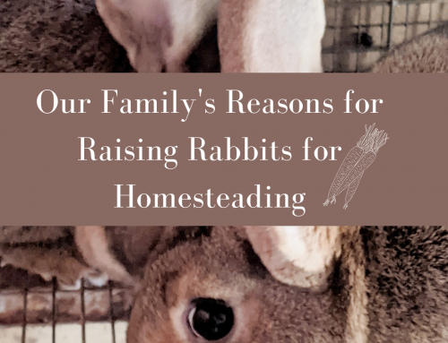 WHY raise Rabbits for Meat—our Family's reasons. (Series Day 1)