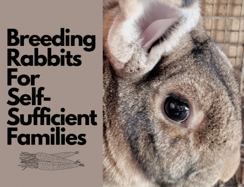 Love is in the Air…Rabbit Breeding time (series start)